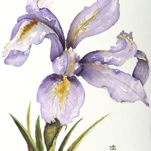 JapaneseIris
